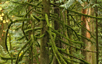 Cathedral Grove is a Magnificent Old Growth Forest Near Port Alberni