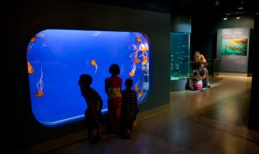 Shaw Ocean Discovery Centre a World Class Attraction In Sidney BC