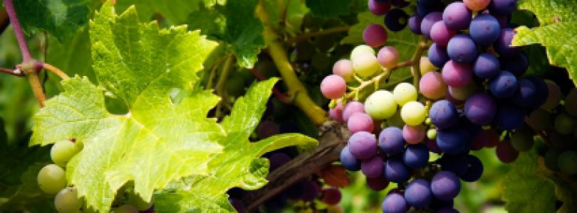 Visit Unique Local Wineries in Vancouver Island's Cowichan Valley