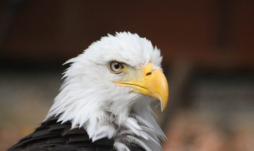 Vancouver Island Travel: The Amazing Raptor Centre near Duncan BC