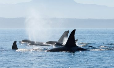 Discovery Marine Safaris offer Exhilarating Adventure Boat Tours