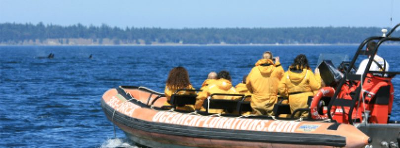 People on a Whale Watching Raft