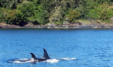 Whale Watching on Vancouver Island