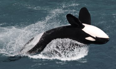 Great Tips For Planning Your Vancouver Island Whale Watching Adventure