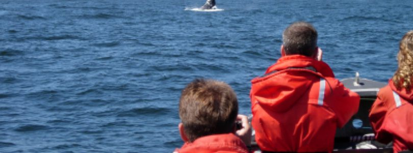 Get The Most Out Of Your Whale Watching Experience