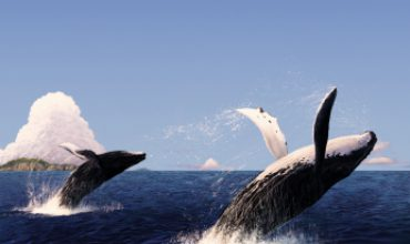 Enjoy A Whale Of A Good Time On Vancouver Island, BC