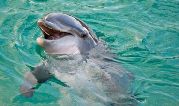 Dolphins learn to speak in whale song