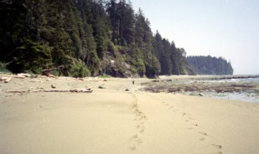 Take a Walk on the Wild Side in Port Hardy