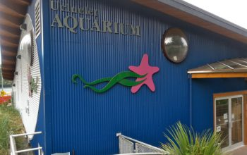 Underwater Adventures at the Ucluelet Aquarium