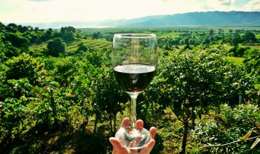 Wine glass & winery orchard