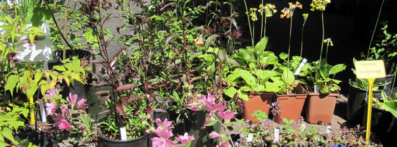 Qualicum Events-Milner Gardens & Woodland Fall Plant Sale