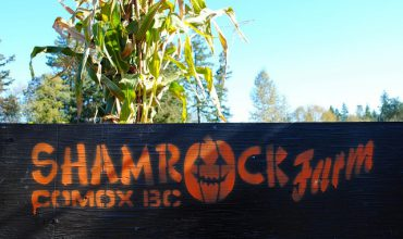 Comox Fall Events-The Pumpkin Patch at Shamrock Farm