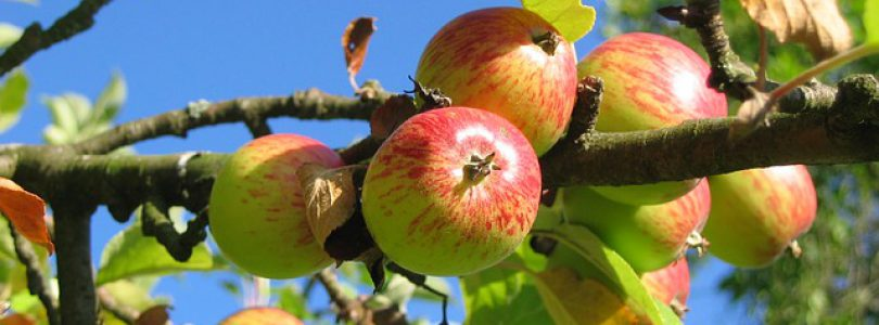 Salt Spring Island Events-Apple Festival 2017