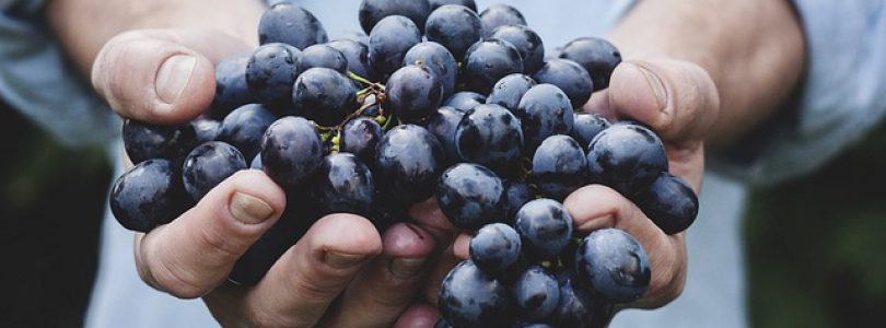 Salt Spring Island Events-Harvest Grape Stomp 2017