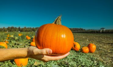 Victoria Fall Events-Pumpkinfest at Galey Farms