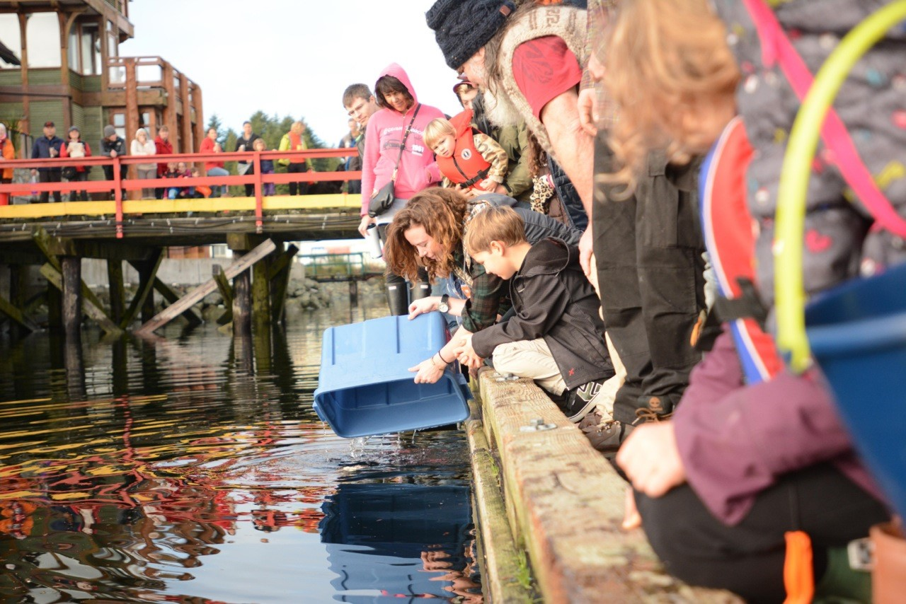 Ucluelet Winter Events-Ucluelet Aquarium Public Animal Release
