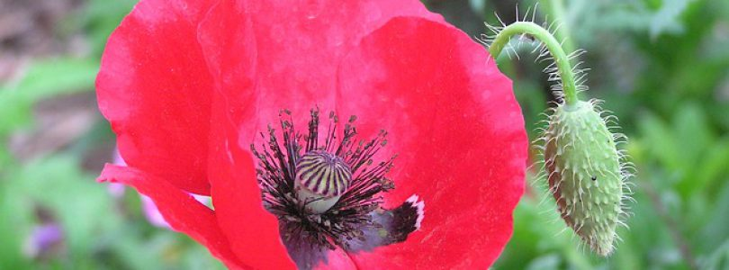 Saanich Fall Events-Saanich Remembrance Day Ceremony