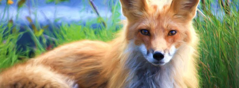Victoria Winter Events-February Fox Fair