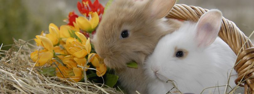 Duncan Spring Events-Easter Fair at the HUB